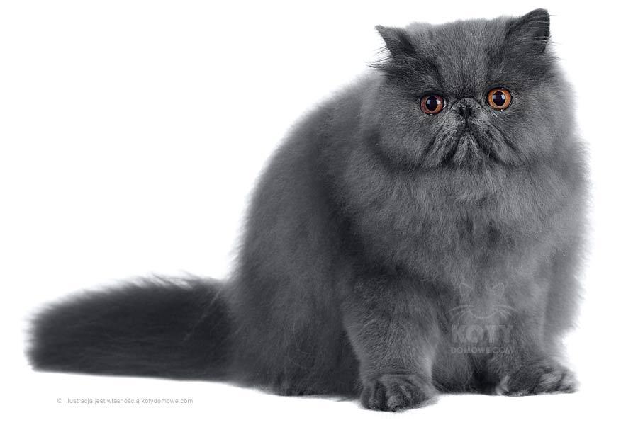 5 ślicznych ras kotów! ♥