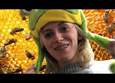 czemu pszczoly nie sluchaja jazzu