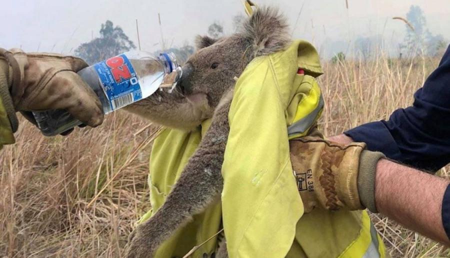 Pożary w Australii wciąż trwają. Jak możemy pomóc?