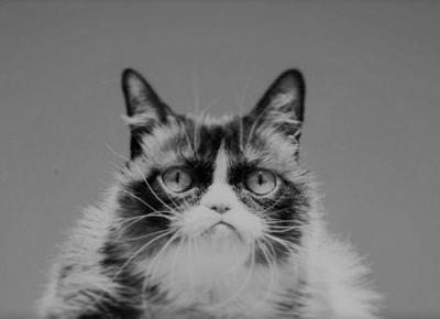 Odszedł Grumpy Cat. Internet o nim nie zapomni