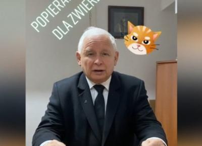 Jarosław Kaczyński przemówił na... TikToku