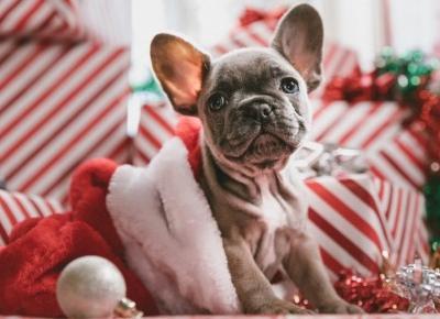 Słuchanie świątecznych piosenek poprawia nastrój? Tak twierdzi psycholog!