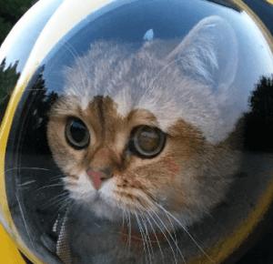 W tym plecaku twój kot będzie wyglądał jak astronauta. Tak teraz podróżuje się ze zwierzakami - Noizz