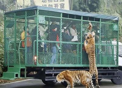 W tym zoo w klatkach siedzą ludzie, a nie zwierzęta!
