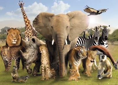 Top 10 zwierzęcych zabójców człowieka