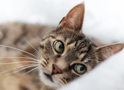LadyAwa Blog: Coś dla zwierzaka! - paczka od NaszeZoo.pl