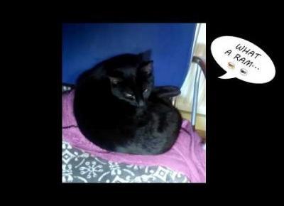 Widzieliście kiedyś aportującego kota?