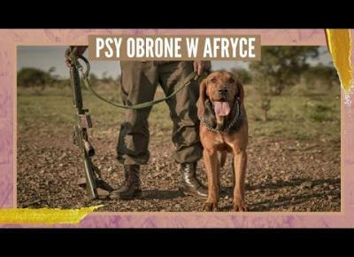 Psy Obronne w Afryce | GlamOnline