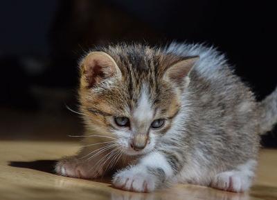 To dramat! W Angoli zabijanie kotów i psów jest czymś na porządku dziennym! UWAGA DRASTYCZNE ZDJĘCIA