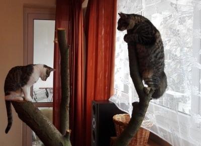 Jak zrobić drapak dla kota? Zobaczcie zdjęcia DIY
