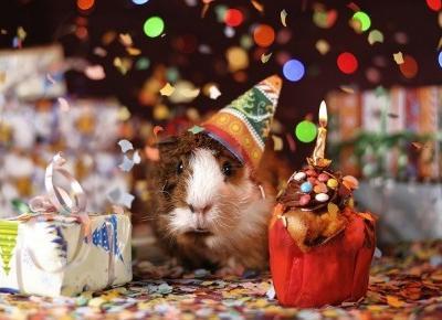 Prezenty urodzinowe w pracy - co kupić współpracownikom, a co szefowi?