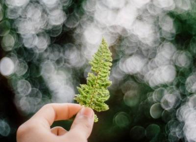 Manicure botaniczny - motywy roślinne na paznokciach - Blog Moment