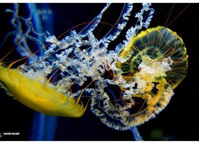 S.E.A. Aquarium Marine Life Park – Jedna z ciekawszych atrakcji Singapuru