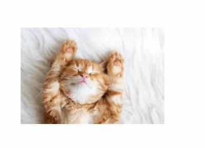 Ranking najsłodszych kociaków!