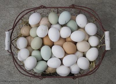 Jak sprawdzić świeżość jajek? - Artykuły Wiadomości - NetKobieta