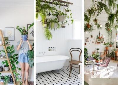 PLANTS INSPIRATIONS