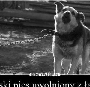 Oczami humanistki: Uwolnijmy polskie psy!
