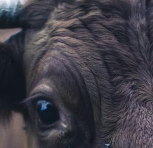 Oczami humanistki: Myślisz, że to twoje niejedzenie mięsa coś da?