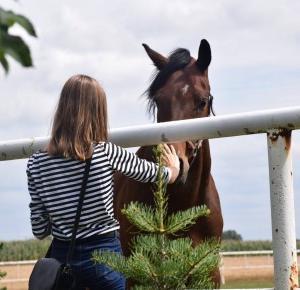 HORSE - - Olivkv -