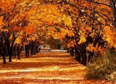 Dlaczego nie lubię  jesieni?