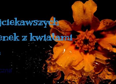 7 najciekawszych piosenek z kwiatami w tle - Muzyczna Lista