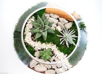 Sprawdź co znajdziesz w pracowni Sunrise Plants | Patryk Tarachoń