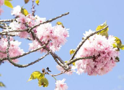 Patenty do wykorzystania w ogrodzie! [DIY] - Sunrise Plants │ Białystok