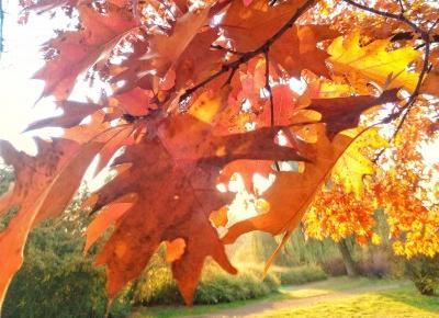 Jesień, którą pokochałam. Przegląd tygodnia