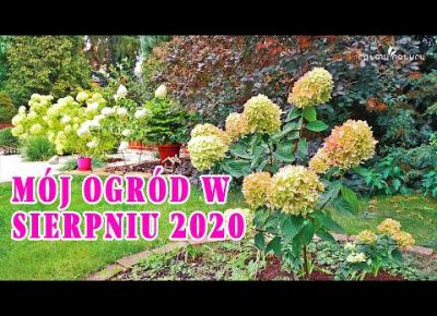 MÓJ OGRÓD W SIERPNIU 2020 - zapraszam na spacer