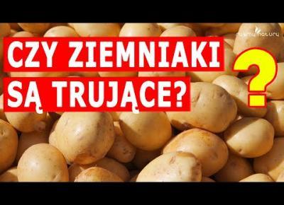 Czy ziemniaki są TRUJĄCE? Jeżeli je jesz, koniecznie sprawdź!