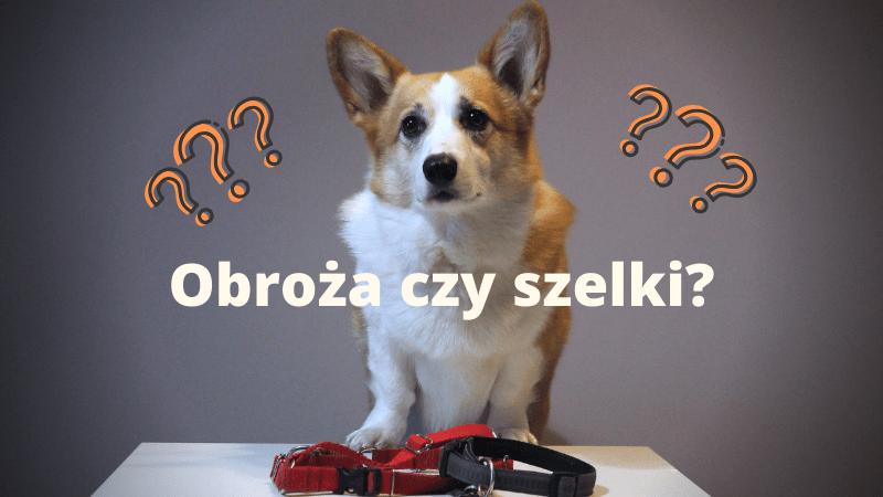 Obroża czy szelki? Co wybrać dla psa? — Sheldon - Blog bez ogonka