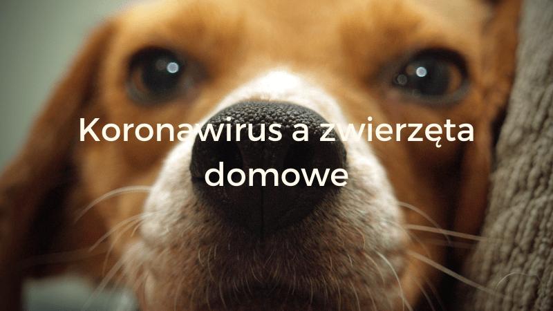 Koronawirus a zwierzęta domowe — Blog bez ogonka