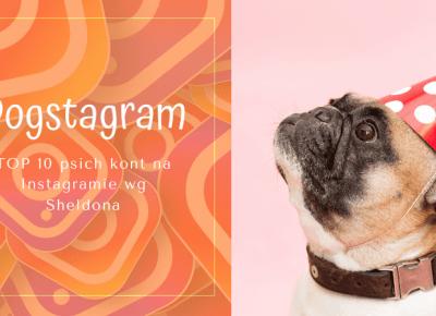 TOP 10 Psich kont na Instagramie według Sheldona — Blog bez ogonka
