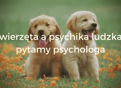 Zwierzęta a psychika ludzka wywiad z psychologiem — Blog bez ogonka