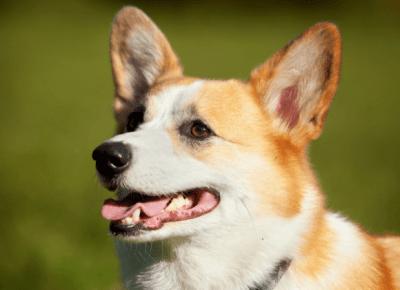 Psia sesja – czyli fotografia rodzinna inaczej! — Blog bez ogonka
