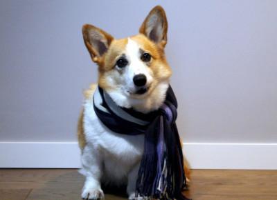 Pies w zimę - jak dbać o psa zimą? — Sheldon - Blog bez ogonka