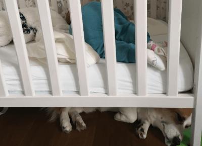 Niemowlę i pies - jak to działa? — Sheldon - Blog bez ogonka