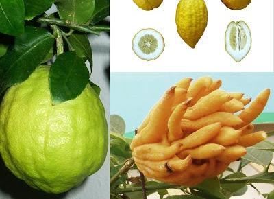 Owocowy kalejdoskop - sprawdź czy znasz te wszystkie egzotyczne owoce!   Diety i ich sekrety