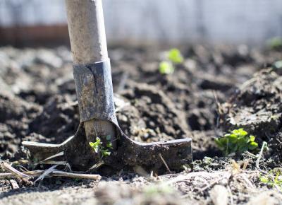 Do kiedy możemy sadzić tuje z doniczek? - KRULCZUK - Blog ogrodniczo - lifestylowy