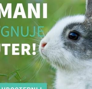Toksyczna kosmetyczka: Cała prawda o testowaniu kosmetyków na zwierzętach