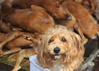 Informacja o psiej restauracji to FAKE