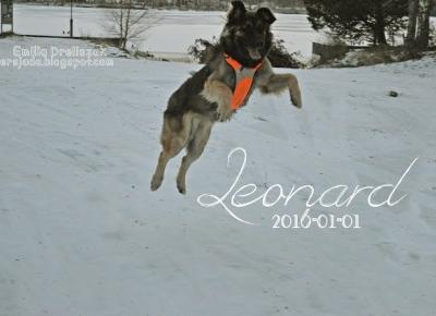 ~Versjada~: Leonard 2017