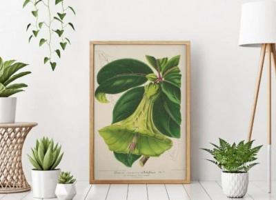 Plakaty botaniczne i roślinne na ścianach