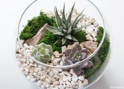 Kompozycje w szkle – Sunrise Plants | Lasy w Słoikach