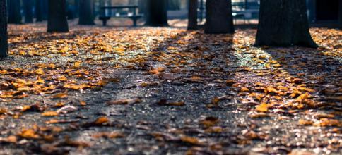 Jesień. - friday