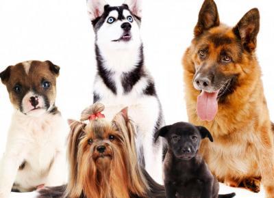 Najpiękniejsze rasy psów na świecie!