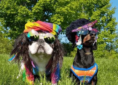 6 najsławniejszych psów na Instagramie!