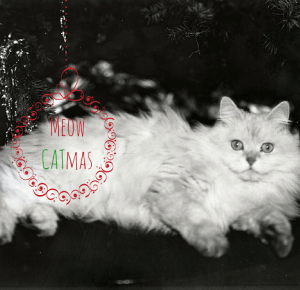 Three Cats Project: Meow CATmas