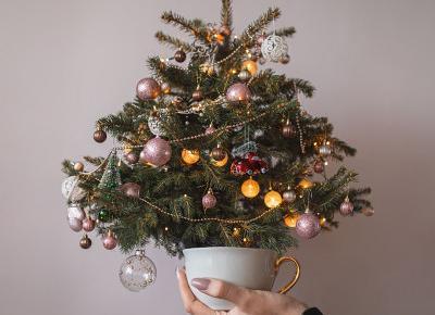 Moja pierwsza żywa choinka i ozdoby świąteczne