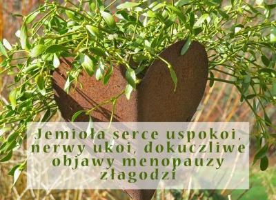 Męczy Cię arytmia serca a może menopauza daje popalić? Ta roślina może okazać się wybawieniem! - Rytmy Natury